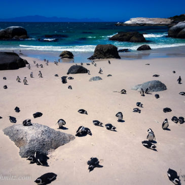 A Day Trip from Cape town to the Cape of Good Hope
